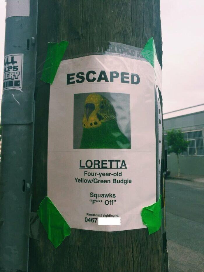 """""""Пропал волнистый попугай. Лоретта. 4 года. Умеет кричать """"Отвали нахрен"""""""