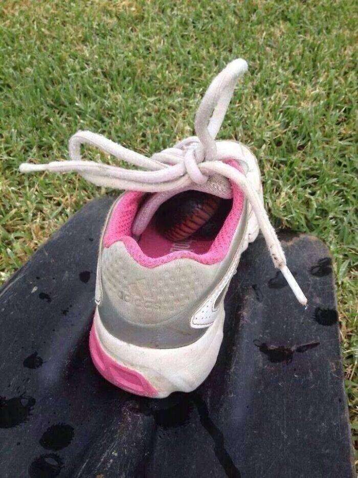 """""""Вот почему мы в Австралии всегда проверяем свою обувь, прежде чем ее надеть"""""""