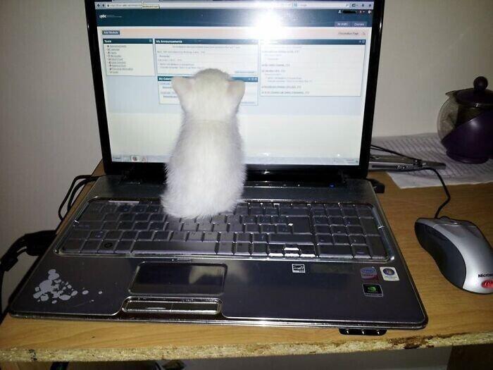 """""""Этот мелкий хакер уже готов к кибер-атаке"""""""