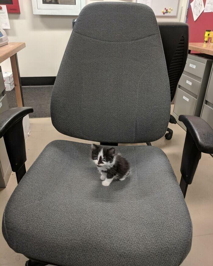 """""""У нас в офисе появился новый хозяин"""""""