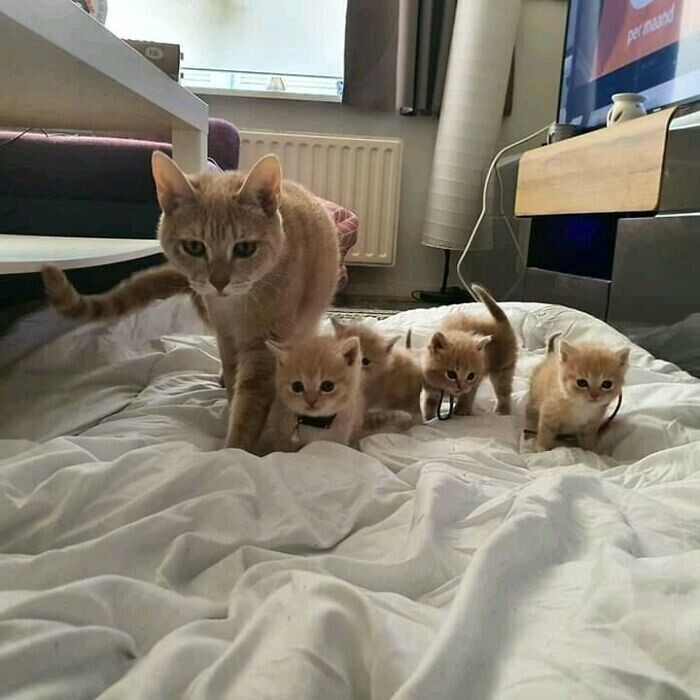 """Моя кошка со своим отрядом мини-копий"""