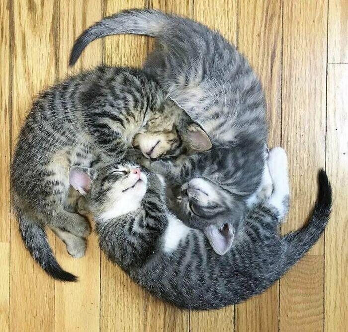 """""""Кажется, наши котята пытаются передать нам какое-то послание"""""""