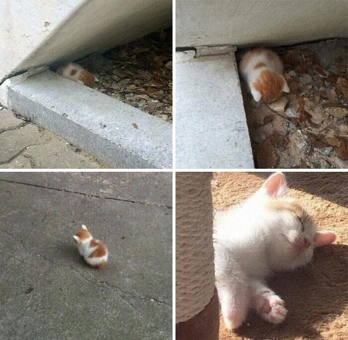 """""""Мой котенок и его четыре состояния на протяжении дня"""""""