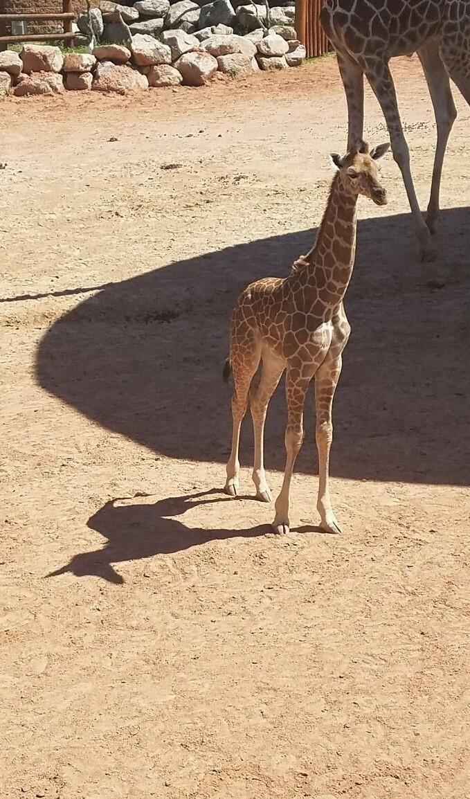 """""""Тень жирафа выглядит как единорог"""""""