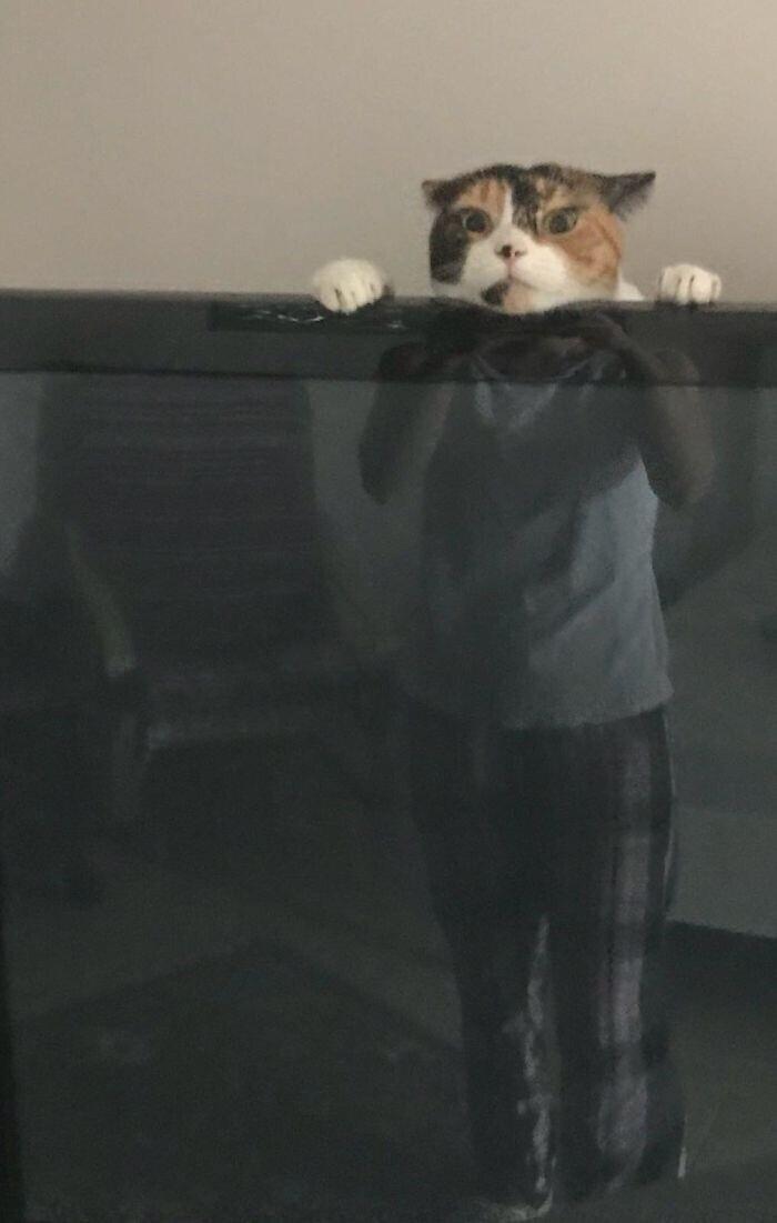 """""""А это наш кот просто играет за телевизором"""""""