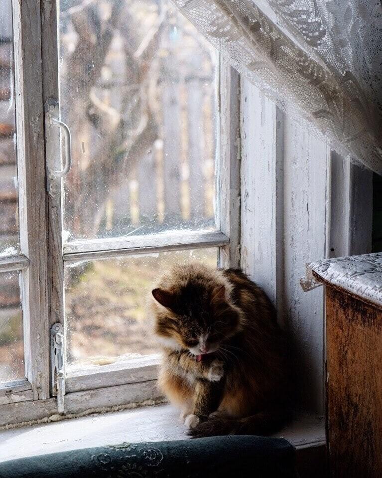 Почти у всех на хозяйстве заведовал наглый кот