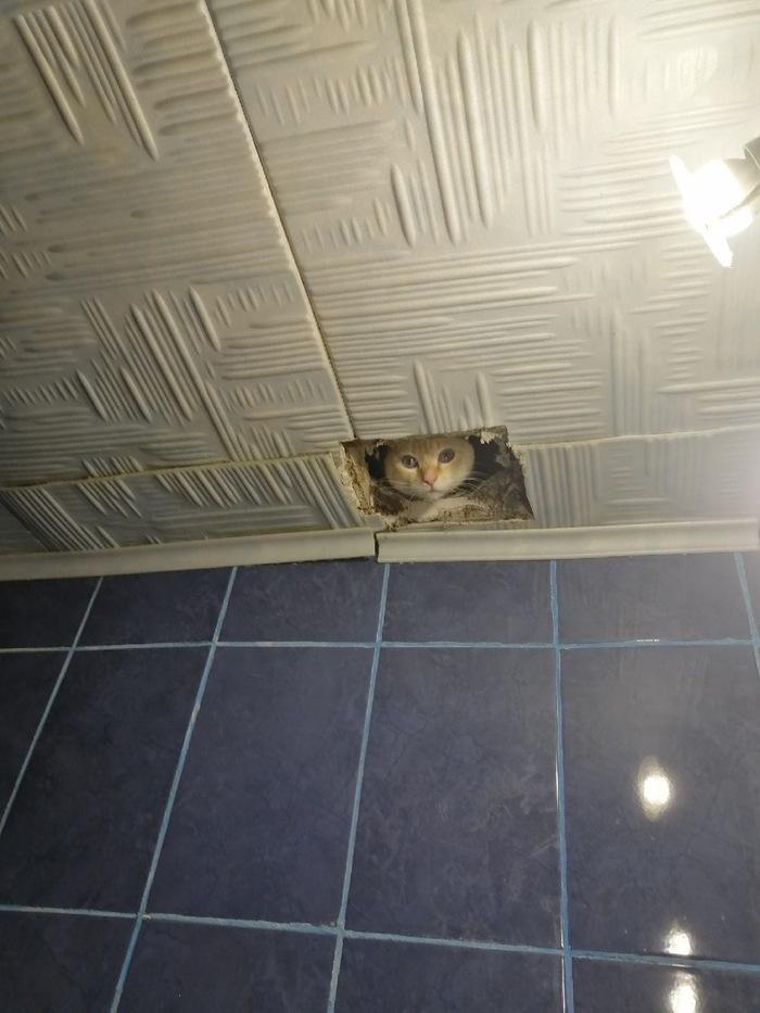 Когда твой сосед - кот