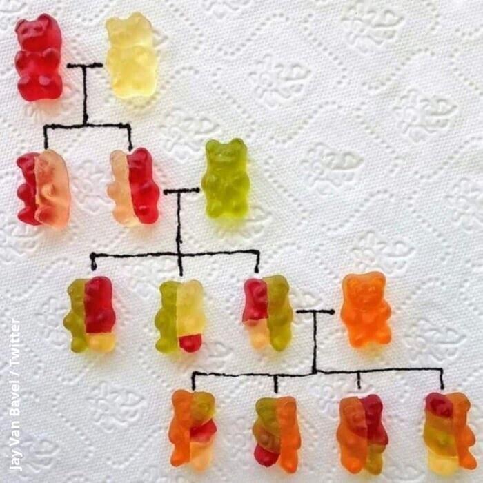 Как объяснить ребенку основы генетики