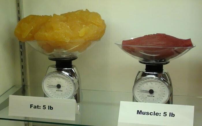 5 фунтов жира по сравнению с 5 фунтами мышц (это примерно 2,3 кг)