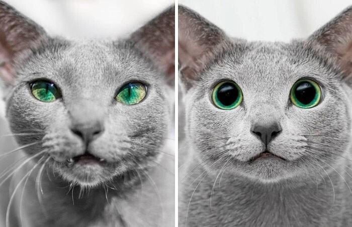 Глаза одной и той же кошки: день и ночь