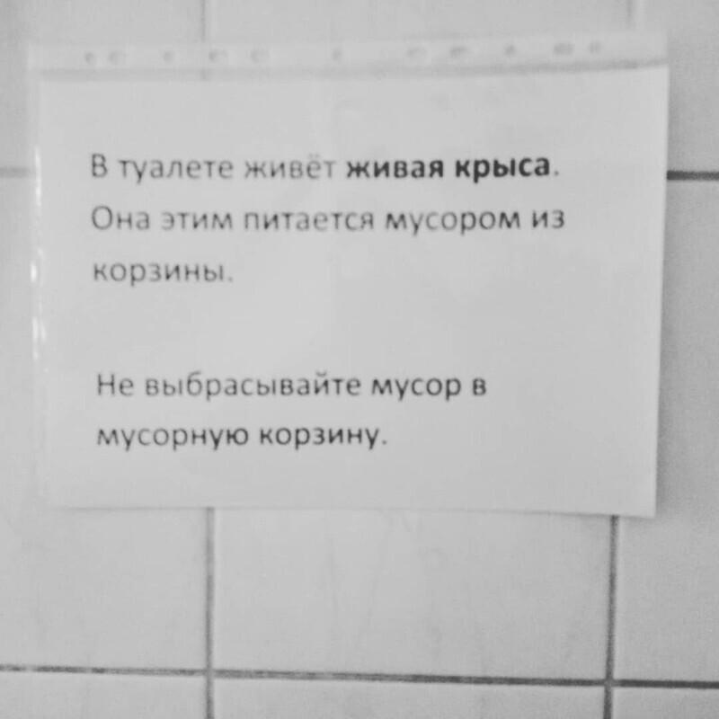 Туалетный питомец