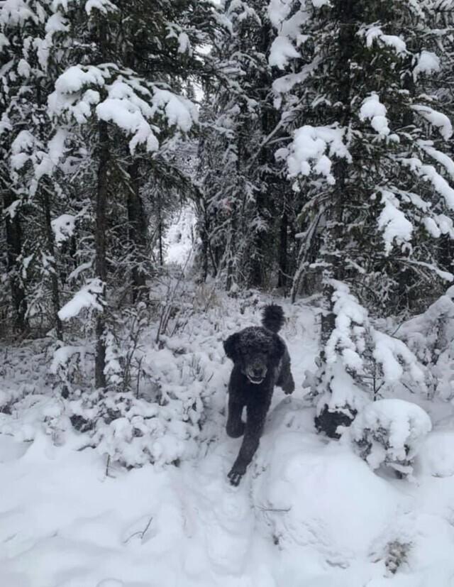 Как будто человек, бегущий по лесу