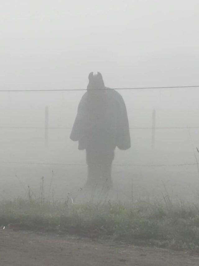 Лошадь в попоне, а не Бэтмен