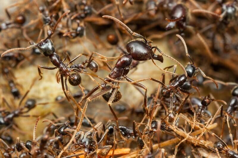 Вес всех муравьев на Земле больше, чем вес всех людей