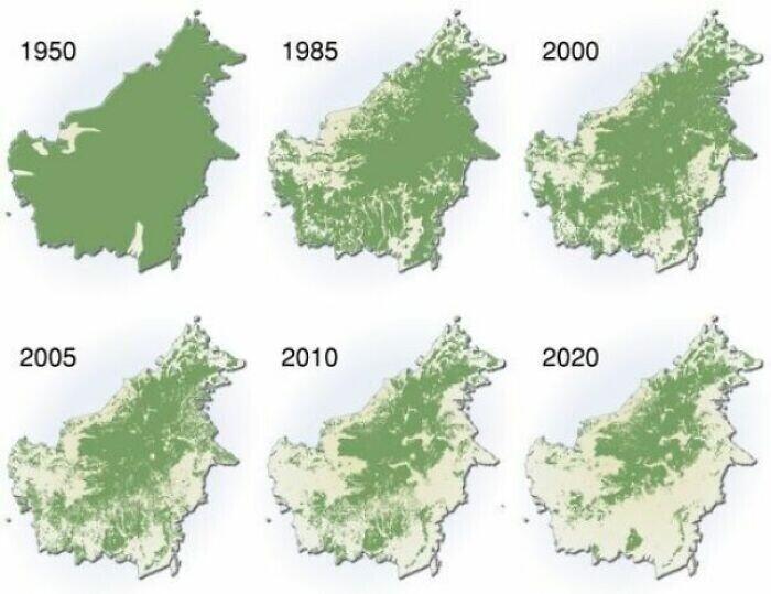 Уничтожение лесов на Борнео, 1950 - 2020