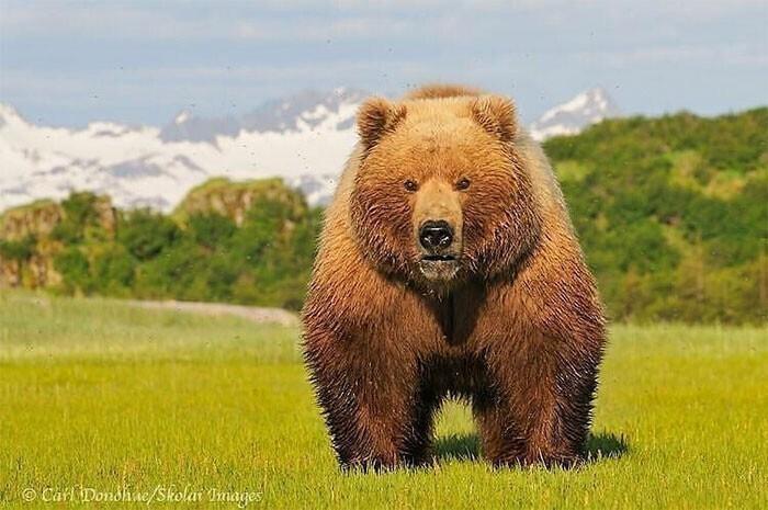Я не Винни Пух, я Медведь Пу!