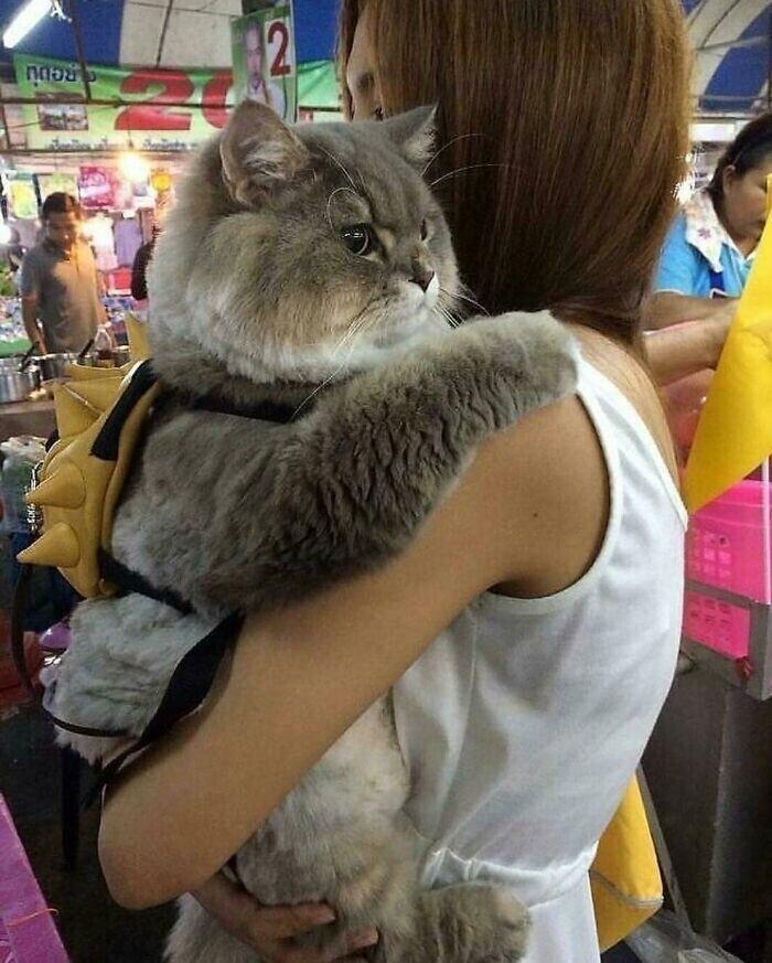 Строгий котище