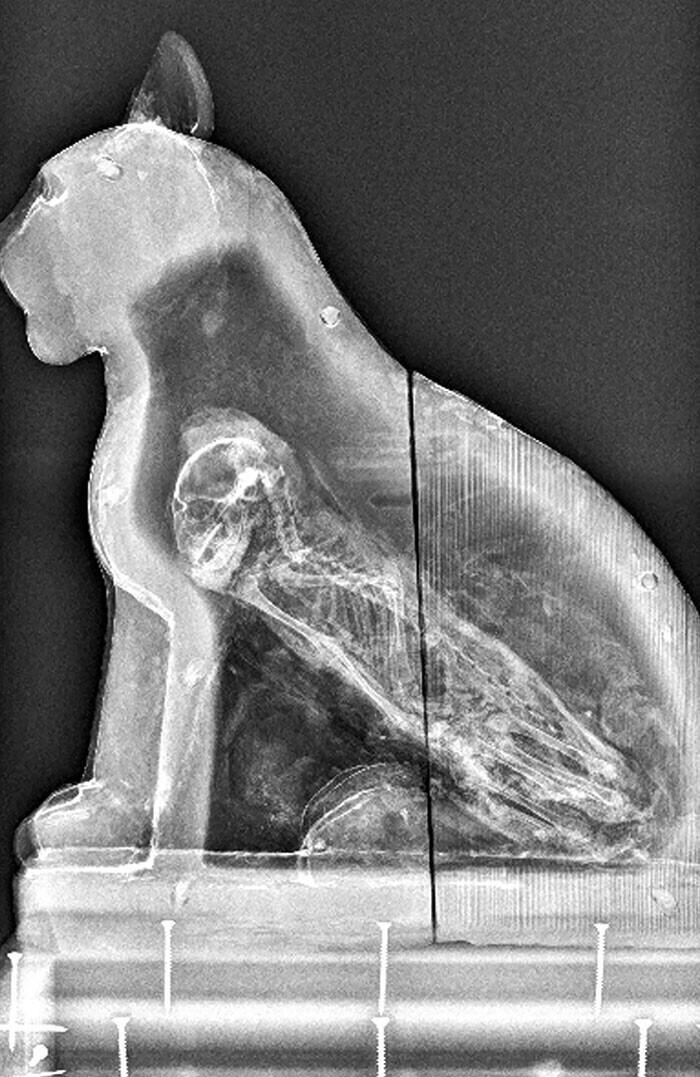 Рентгеновский снимок египетского саркофага с мумией кошки внутри