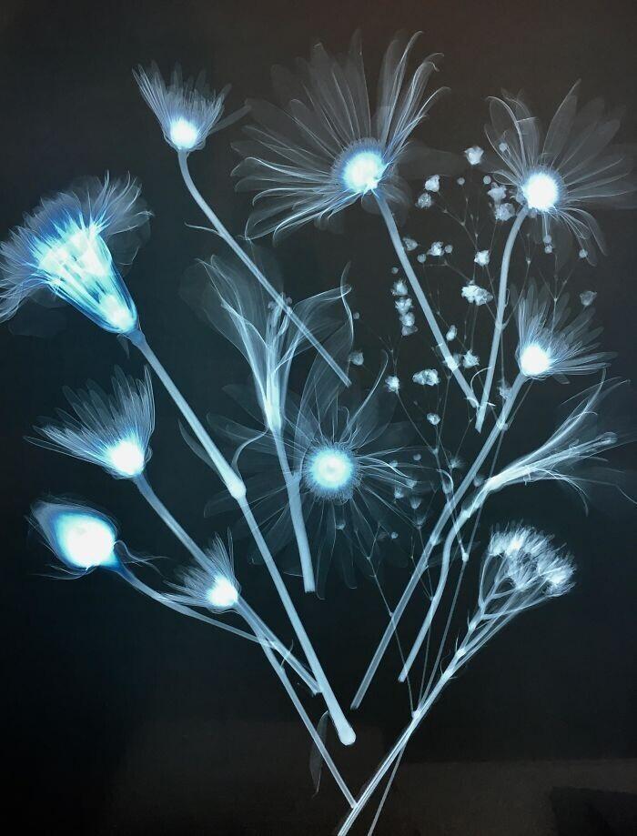 Букет цветов на рентгене