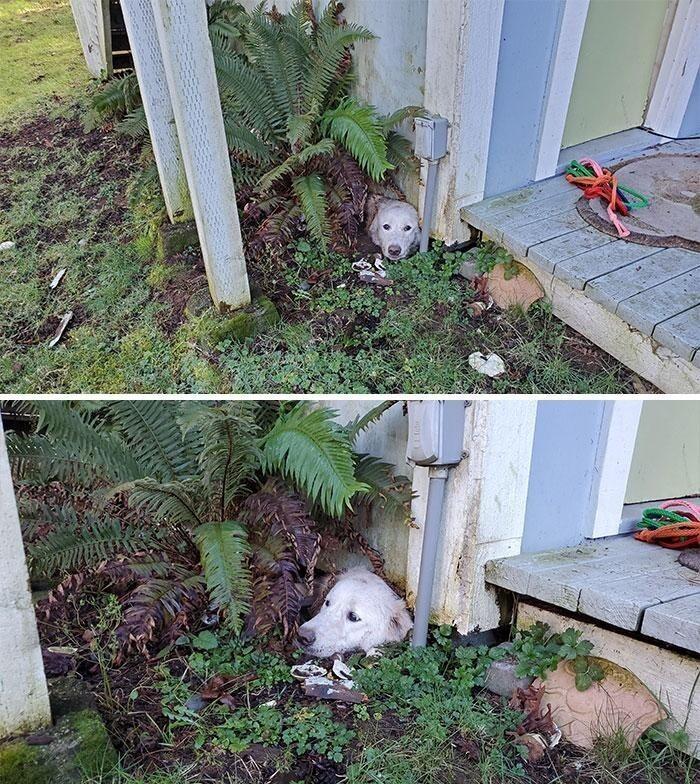 """""""Выпустили собаку утром и не могли потом ее найти. Оказалось, она вырыла тоннель и застряла в нем"""""""
