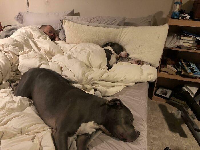 Когда покупаешь огромную кровать, но тебя на нее не пускают