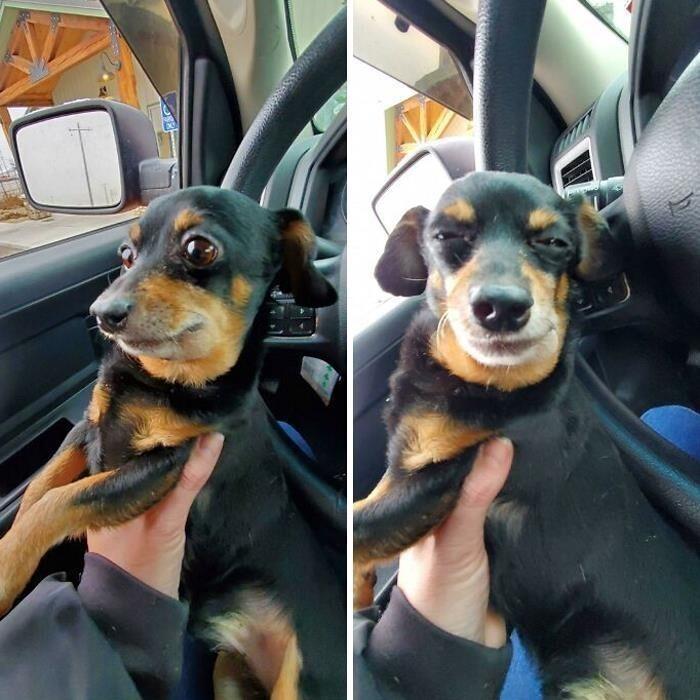До ветеринара и после