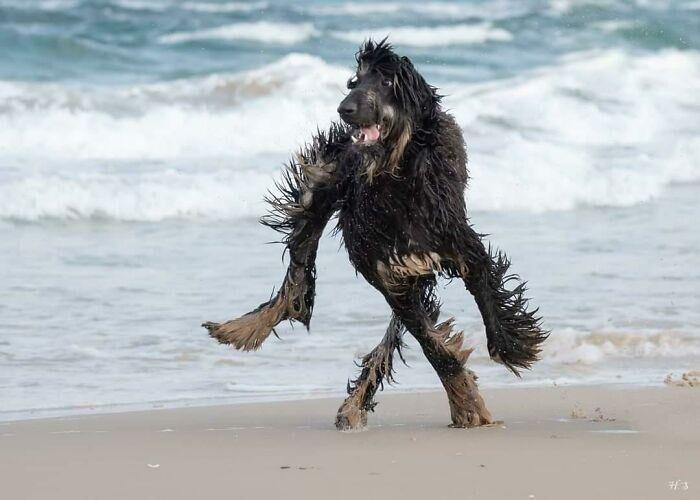 Сенсация: первая фотография лох-несского чудовища