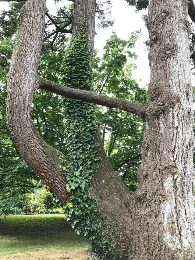 Дерево-иллюзионист