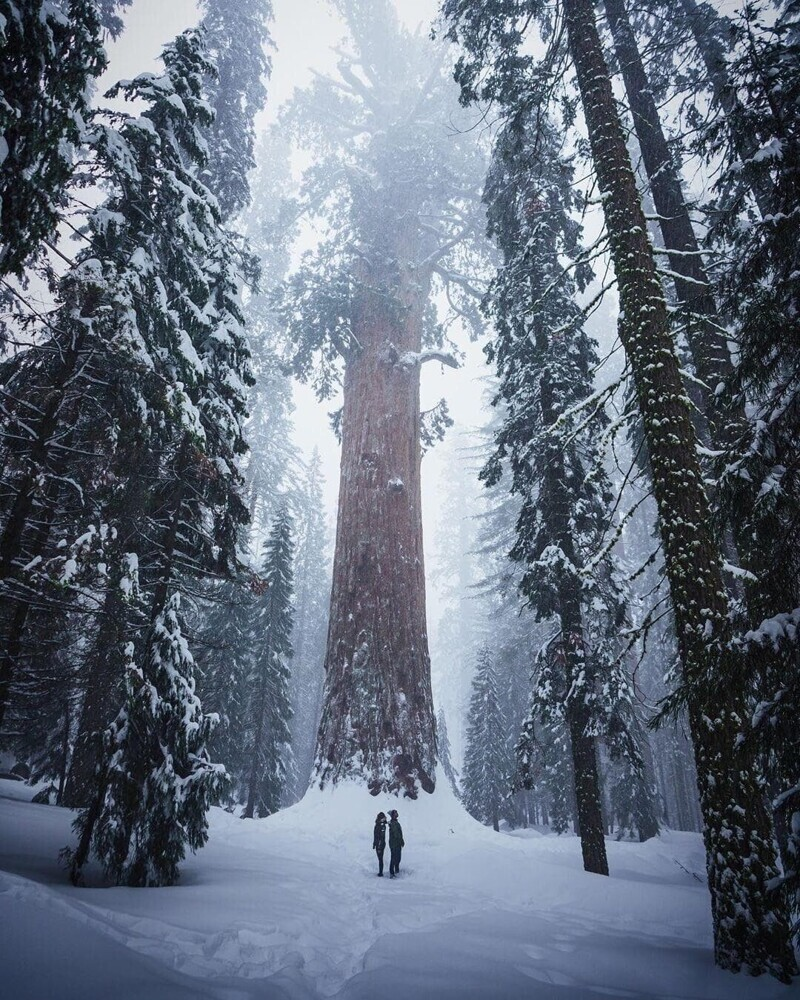 Национальный парк Секвойя, США, зимой