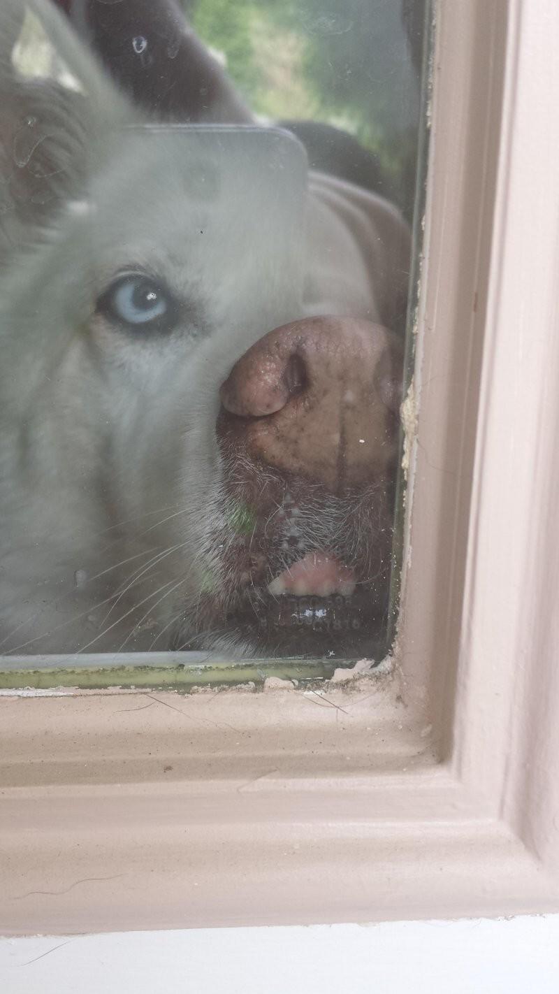 Соседский пёс чуть не сделал меня заикой
