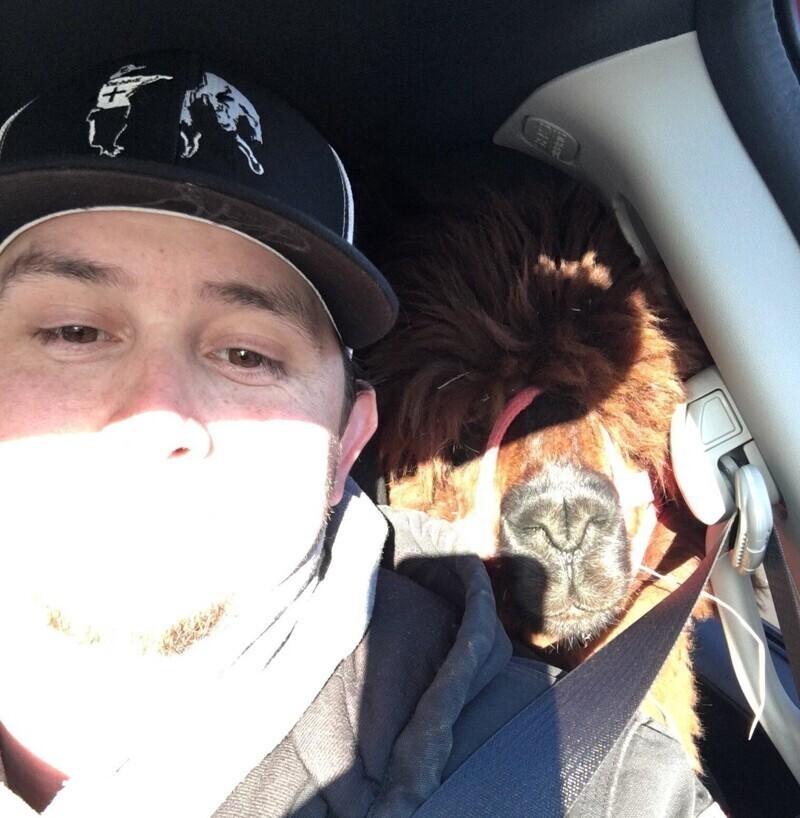 Мой брат сделал сюрприз своей жене в виде альпаки