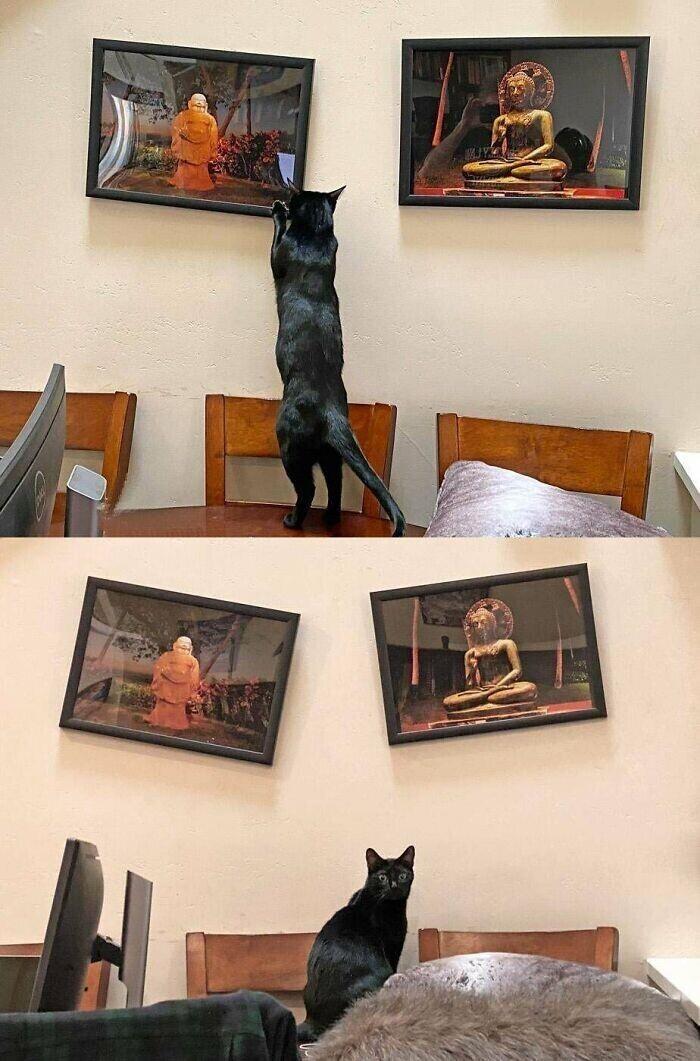 """""""Каждый раз после того, как я выравниваю картины, кот приходит и делает, как ему нравится"""""""