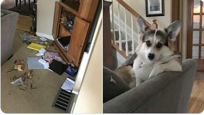 """""""Мой пес устроил беспорядок, и сел на диван рядом с выражением мордочки типа: """"Ну давай, убирай"""""""""""