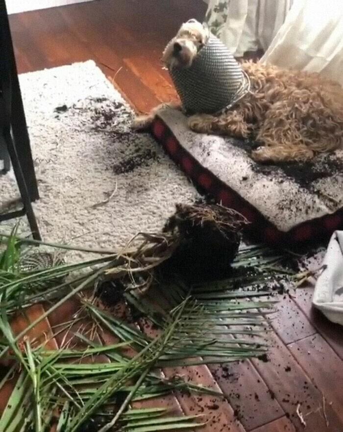 """""""Кажется, мой пес решил стать растением.."""""""