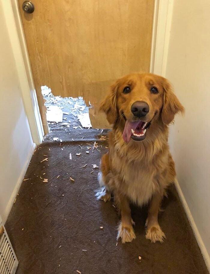 """""""Мама, я просто очень хотел открыть дверь"""""""