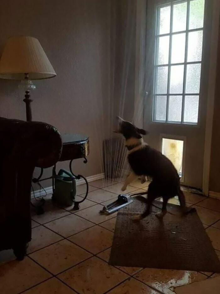 """""""А наш пес отличился. Он принес в дом разбрызгиватель, и громко сообщил всем об этом"""""""