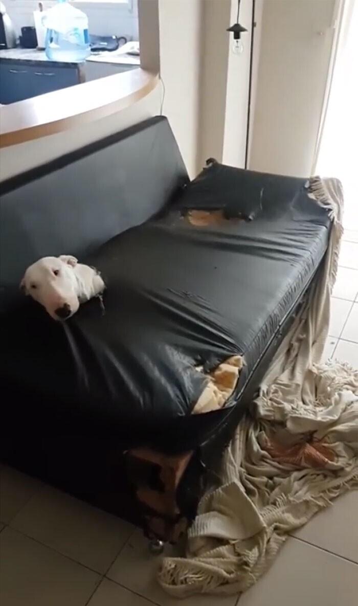 """""""Не могу понять, кто мог так уничтожить диван"""""""