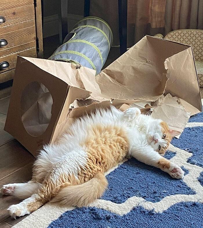 """Репродукция: """"Кот и разрушенный картонный туннель"""""""