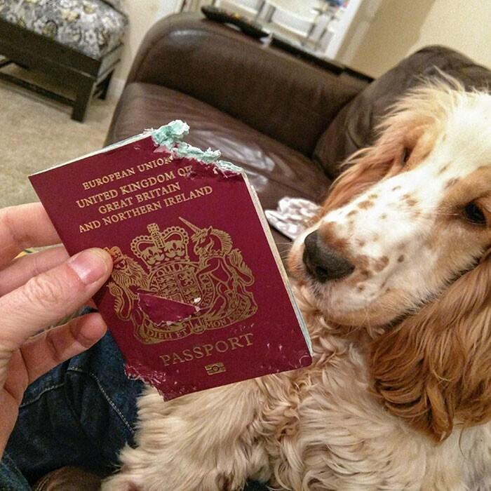 Когда очень не хочешь, чтобы мама куда-то улетала, и съедаешь ее паспорт