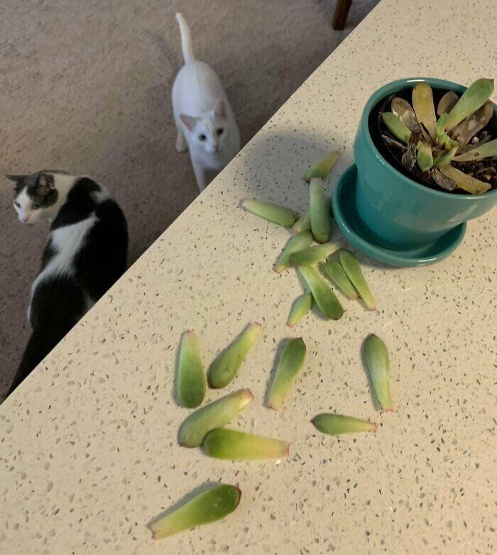 """""""Купил первое растение для дома. Оно прожило 8 часов"""""""