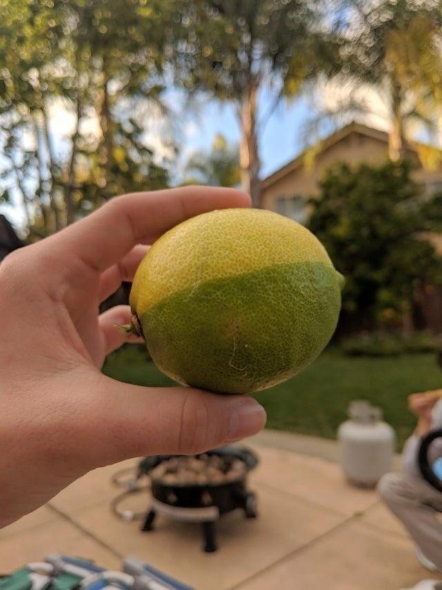 Лимон-гибрид