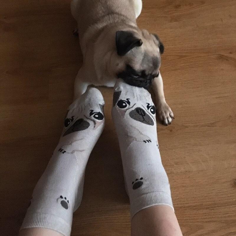 Нашему псу очень не нравятся похожие на собаку носки