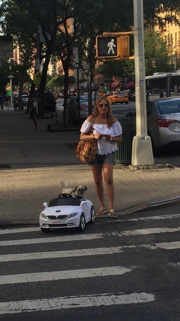 У этой собаки есть свой BMW