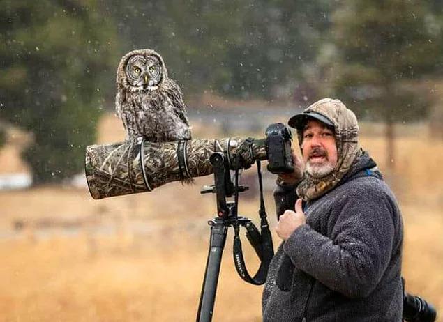 Всем, кроме меня, сегодня удалось сфотографировать сову