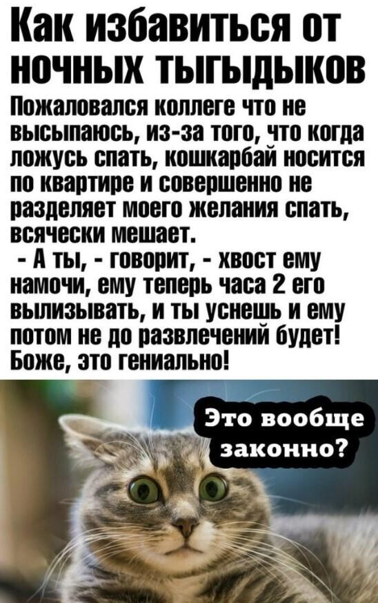 Замечательный совет для тех, кто завел себе котика