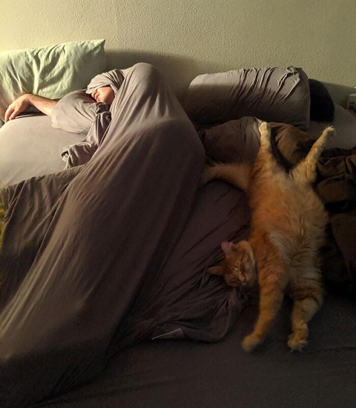 """""""У всех такие милые фото со спящими хозяевами и кошками. А вот мои придурки"""""""