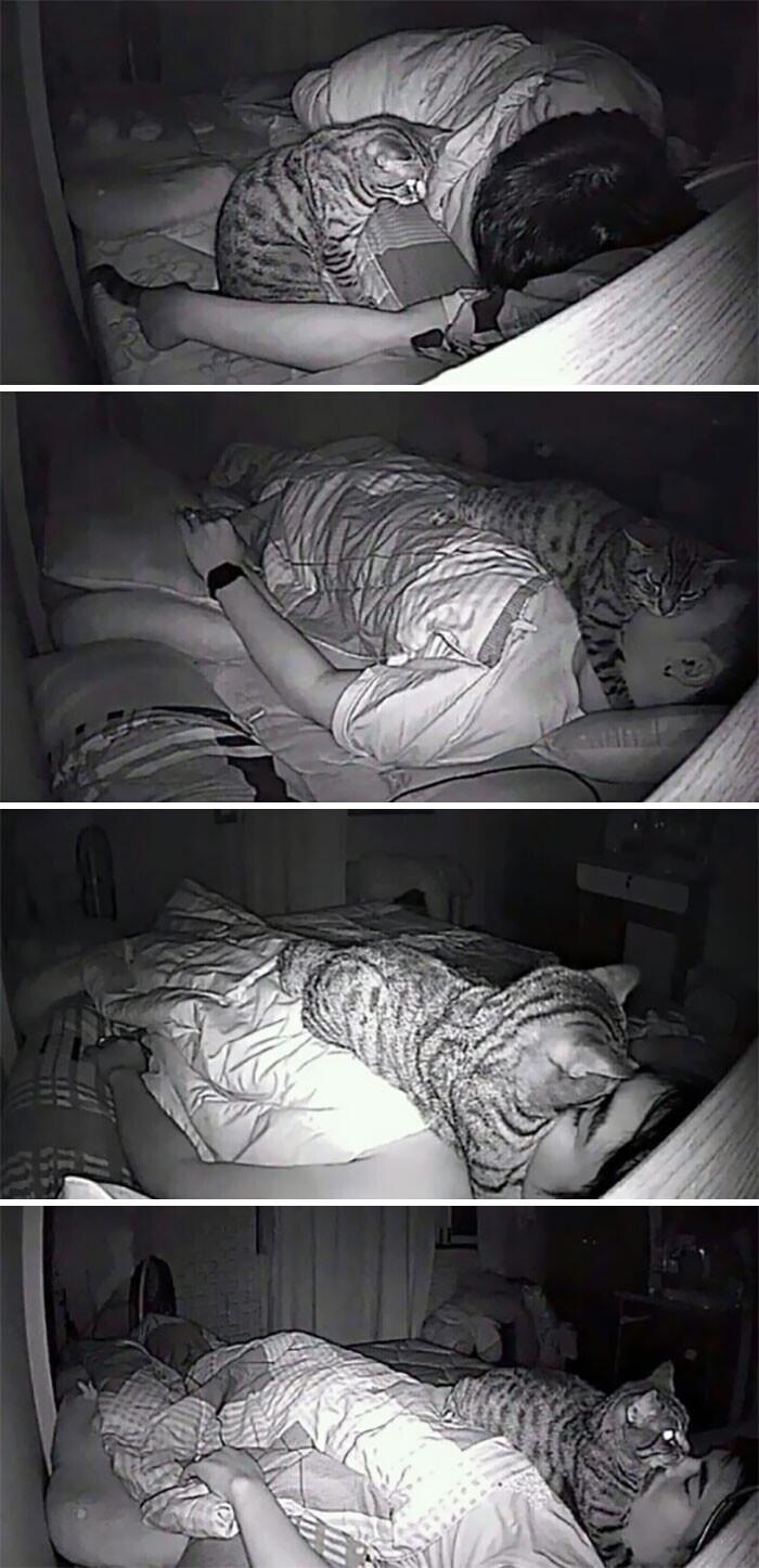 Парень поставил камеру, чтобы узнать, что его кошка делает ночью.. и удивился