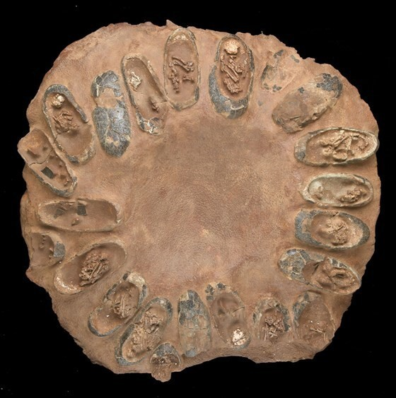 Это окаменелое гнездо хищных птиц, 65 миллионов лет назад. Яйца разбиты, и видны крошечные скелеты