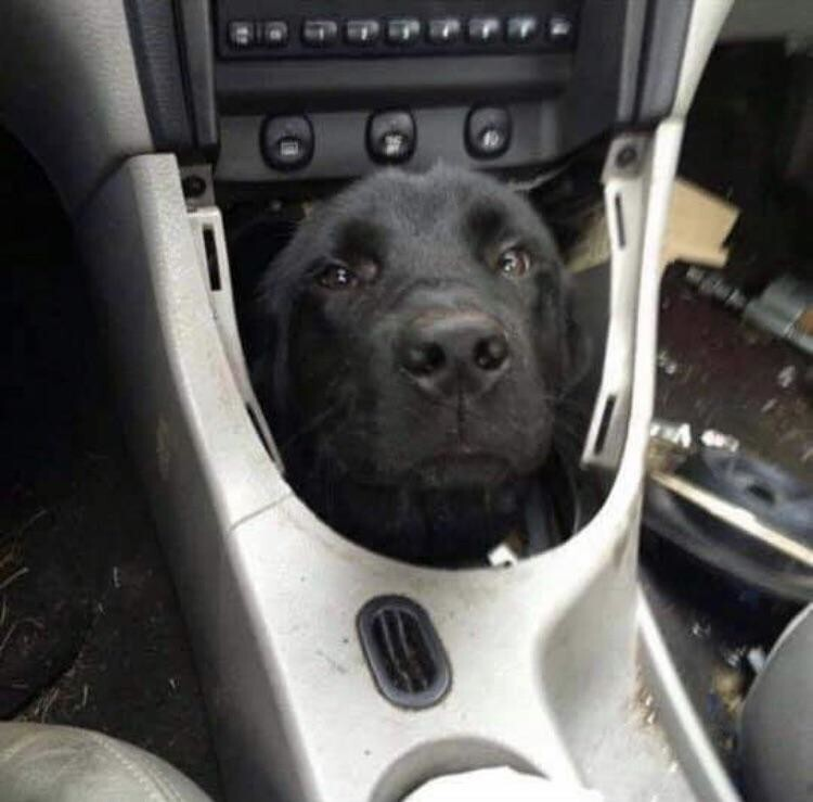 Хозяин, у тебя машина барахлит