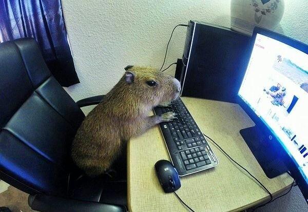 В сети никто не знает, что ты капибара